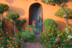 Beginner's Guide to the Xeriscaping Revolution